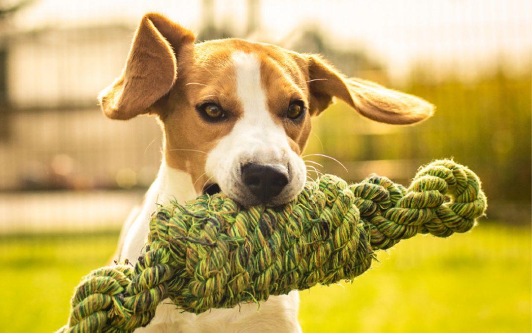 À Levallois, deux parcs canins vous attendent !