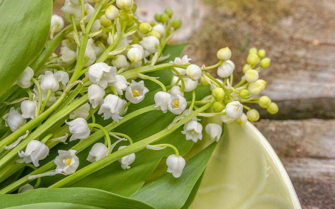 Commandez votre muguet du 1er mai aux fleuristes de Levallois !